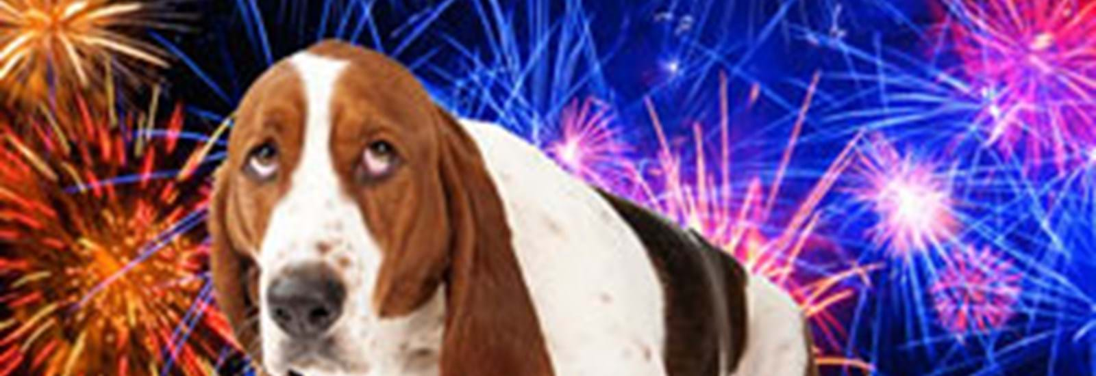 Banner for How to help your pets cope during fireworks season