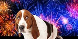 Image for Give your furry friends a helping hand during fireworks season